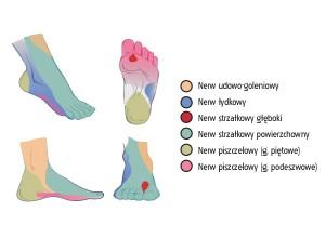 Schemat czuciowego unerwienia stopy