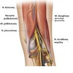 Anatomia dołu podkolanowego