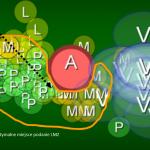 Schemat prezentujący zmienność anatomiczną położenia struktur nerwowych splotu ramiennego w okolicy podobojczykowej (LIF Approach)