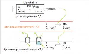 Mechanizm działania LMZ