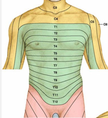 Schemat przedstawiający przebieg dermatomów w okolicy tułowia